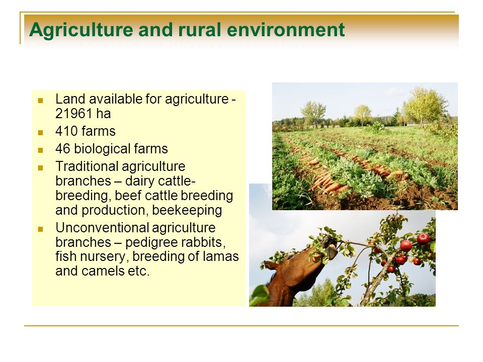 Agriculture and rural environment Land available for agriculture - 21961 ha 410 farms 46 biological farms Traditional agriculture branches – dairy cat