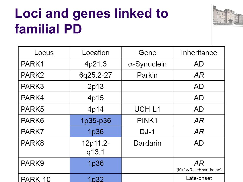 Loci and genes linked to familial PD LocusLocationGeneInheritance PARK14p21.3 -Synuclein AD PARK26q25.2-27ParkinAR PARK32p13AD PARK44p15AD PARK54p14UCH-L1AD PARK61p35-p36PINK1AR PARK71p36DJ-1AR PARK812p11.2- q13.1 DardarinAD PARK91p36AR (Kufor-Rakeb syndrome) PARK 101p32 Late-onset susceptibility gene