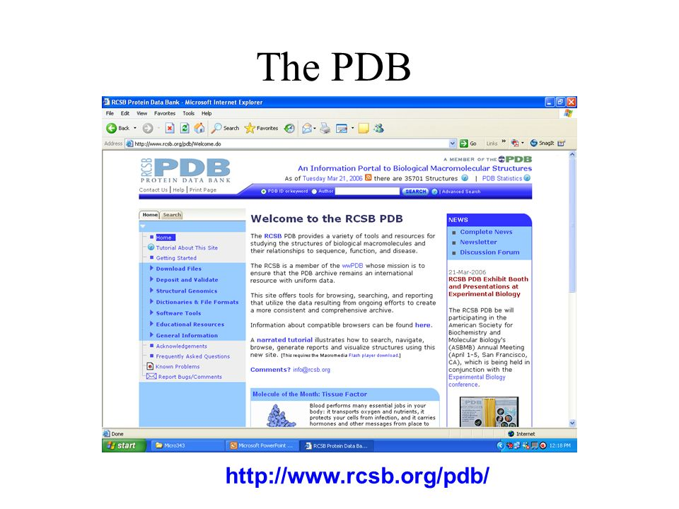 The PDB http://www.rcsb.org/pdb/