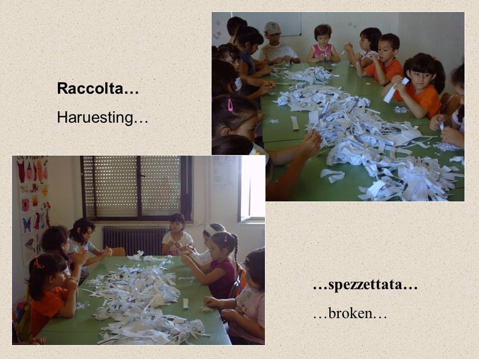 …spezzettata… …broken… Raccolta… Haruesting…