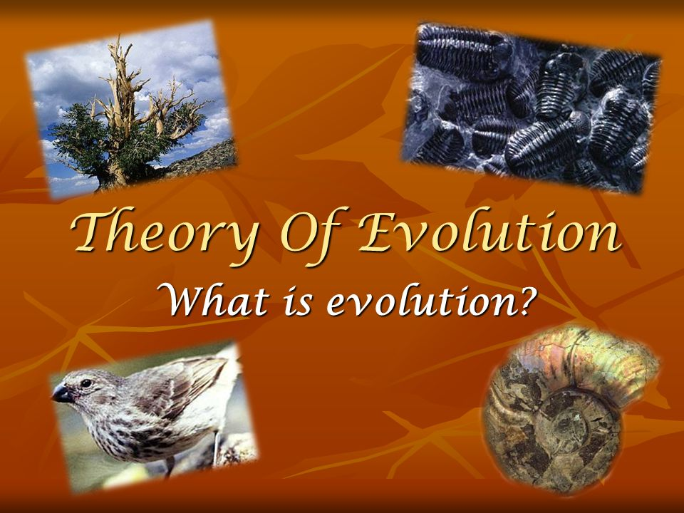Theory Of Evolution What is evolution
