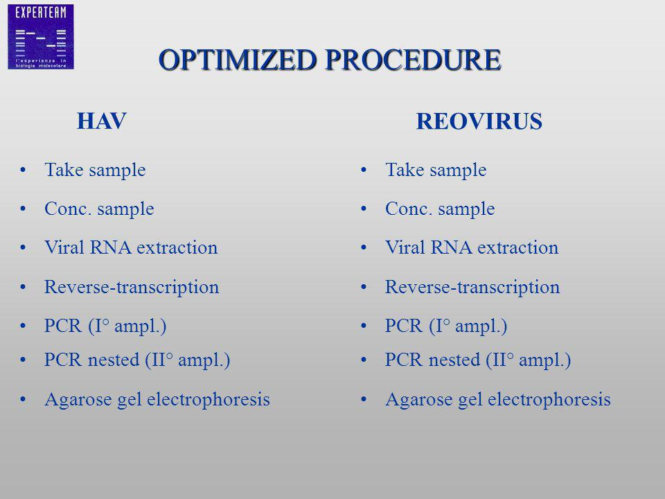 OPTIMIZED PROCEDURE Take sample Conc. sample Viral RNA extraction Reverse-transcription PCR (I° ampl.) PCR nested (II° ampl.) Agarose gel electrophore