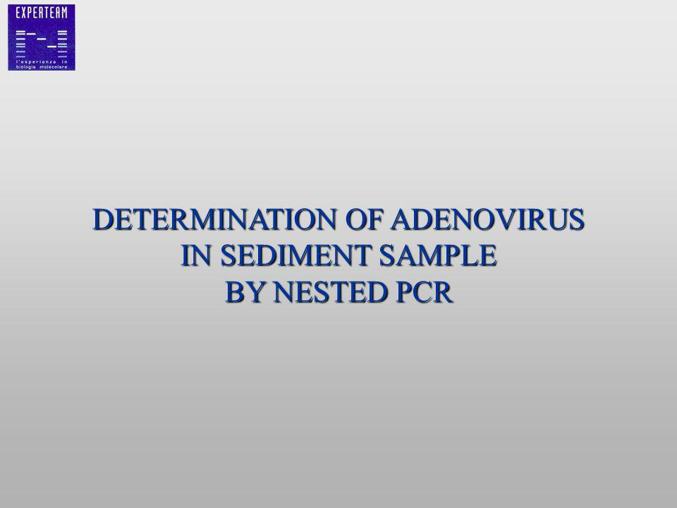 DETERMINATION OF ADENOVIRUS IN SEDIMENT SAMPLE BY NESTED PCR