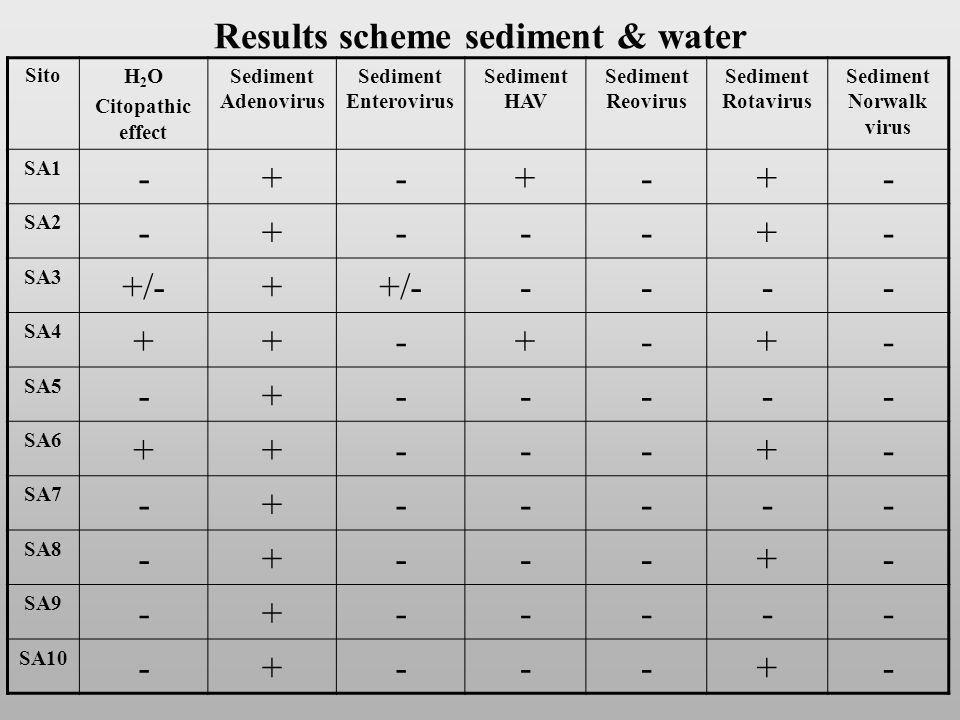 Results scheme sediment & water Sito H 2 O Citopathic effect Sediment Adenovirus Sediment Enterovirus Sediment HAV Sediment Reovirus Sediment Rotavirus Sediment Norwalk virus SA1 -+-+-+- SA2 -+---+- SA3 +/-+ ---- SA4 ++-+-+- SA5 -+----- SA6 ++---+- SA7 -+----- SA8 -+---+- SA9 -+----- SA10 -+---+-