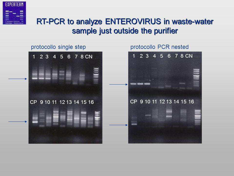RT-PCR to analyze ENTEROVIRUS in waste-water sample just outside the purifier protocollo single stepprotocollo PCR nested 12345678CN CP910111213141516 12345678CN CP910111213141516