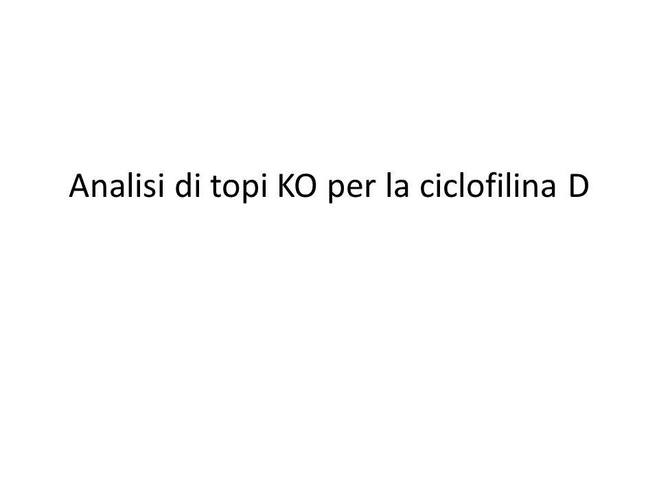 Analisi di topi KO per la ciclofilina D