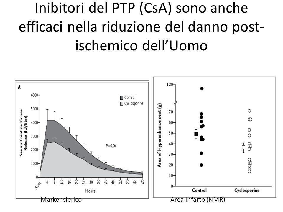 Inibitori del PTP (CsA) sono anche efficaci nella riduzione del danno post- ischemico dellUomo Marker siericoArea infarto (NMR)