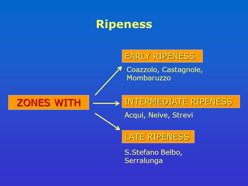 Ripeness LATE RIPENESS EARLY RIPENESS ZONES WITH INTERMEDIATE RIPENESS Coazzolo, Castagnole, Mombaruzzo Acqui, Neive, Strevi S.Stefano Belbo, Serralunga