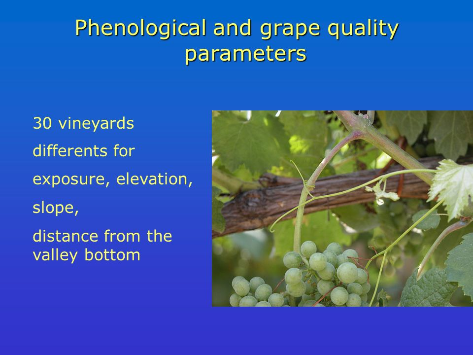 Phenological and grape quality parameters 30 vineyards differents for exposure, elevation, slope, distance from the valley bottom
