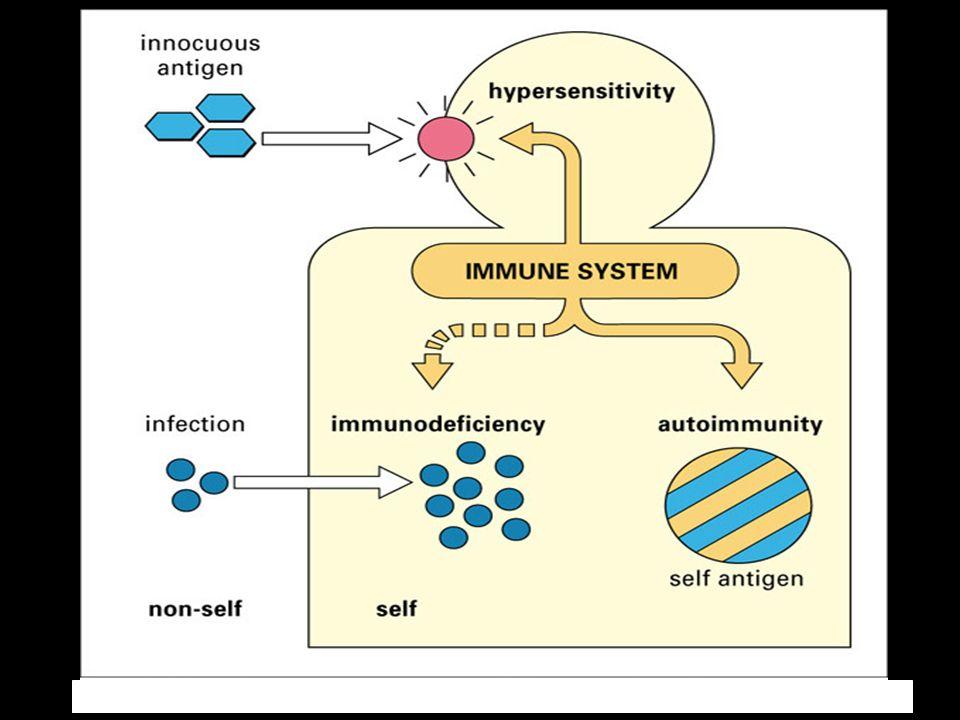 Examples of Type II Hypersensitivity Drug Induced Hemolytic Anemia Rh Disease of the Newborn Autoimmune hyperthyroidsim Myasthenia gravis Blood Transfusion Reactions