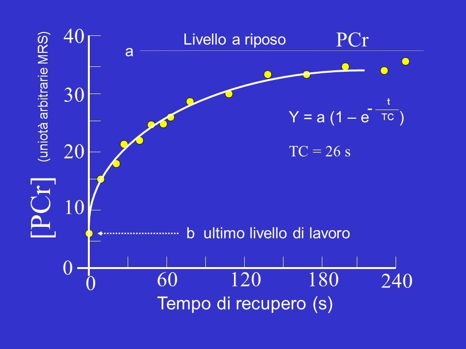 60120180 240 0 0 40 20 10 30 Tempo di recupero (s) (uniotà arbitrarie MRS) PCr Livello a riposo a b ultimo livello di lavoro Y = a (1 – e ) - TC t TC = 26 s [PCr]