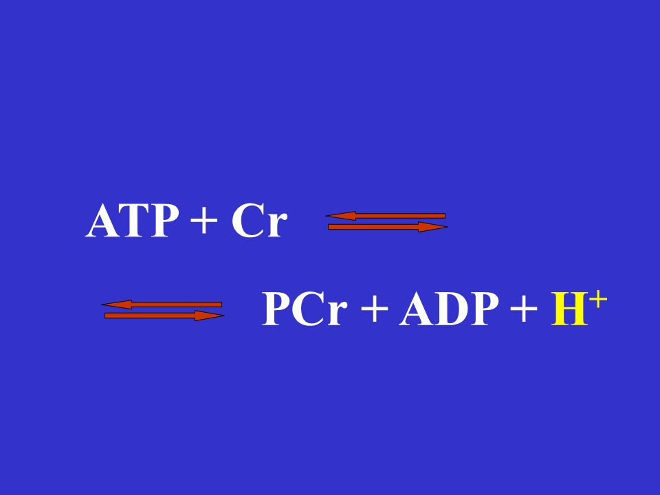PCr + ADP + H + ATP + Cr