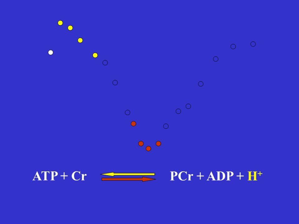 PCr + ADP + H +