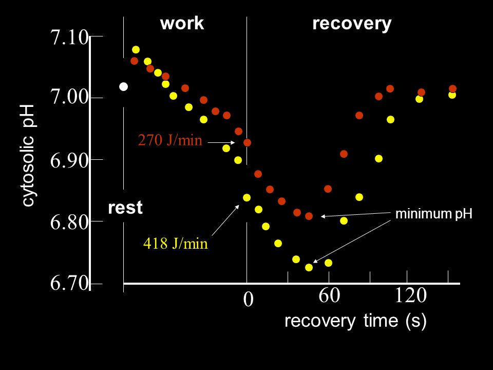 6.70 6.80 6.90 7.00 7.10 cytosolic pH 60120 0 recovery time (s) rest workrecovery 418 J/min 270 J/min minimum pH
