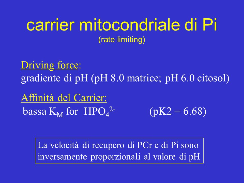 La velocità di recupero di PCr e di Pi sono inversamente proporzionali al valore di pH carrier mitocondriale di Pi (rate limiting) Driving force: grad