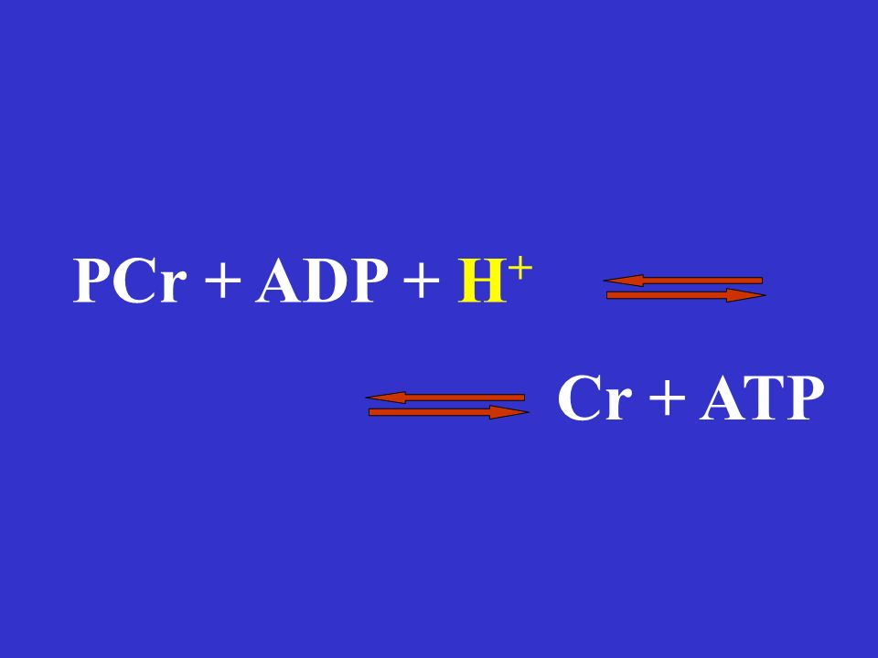 PCr + ADP + H + Cr + ATP