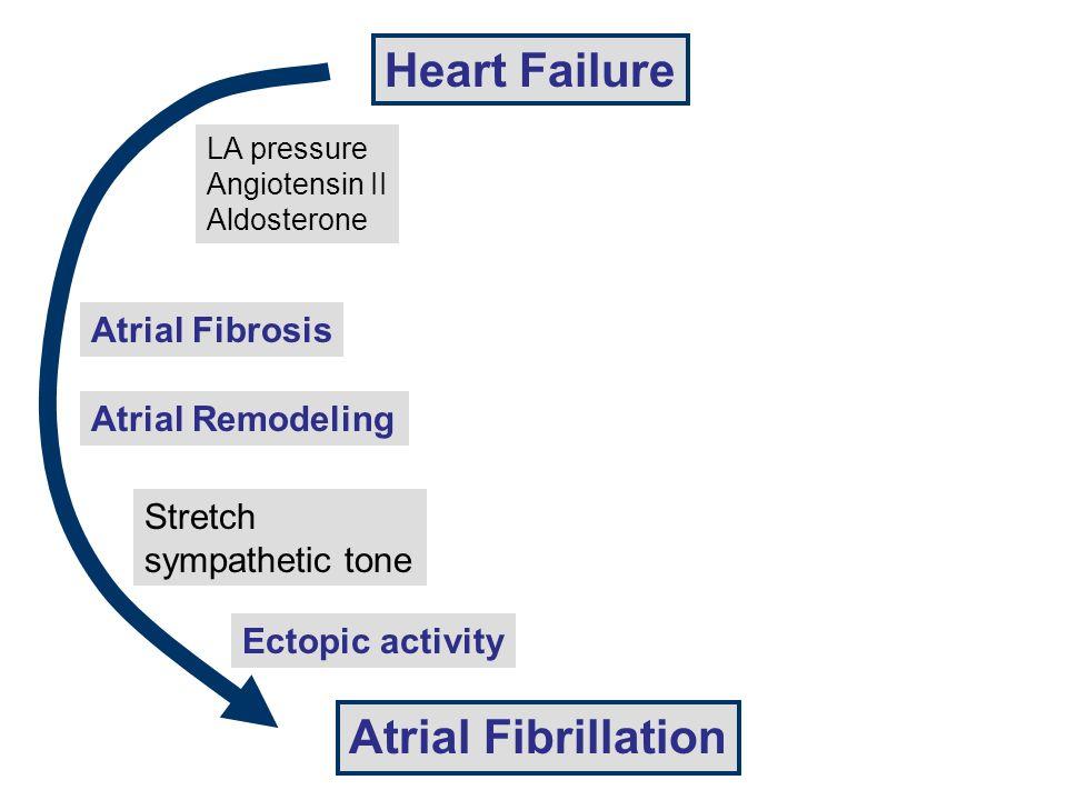 Heart Failure Atrial Remodeling Atrial Fibrillation LA pressure Angiotensin II Aldosterone Atrial Fibrosis Stretch sympathetic tone Ectopic activity