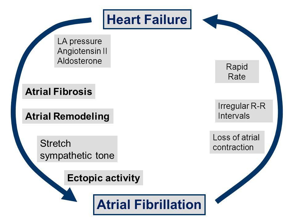 Heart Failure Atrial Remodeling Atrial Fibrillation LA pressure Angiotensin II Aldosterone Atrial Fibrosis Stretch sympathetic tone Ectopic activity Loss of atrial contraction Irregular R-R Intervals Rapid Rate