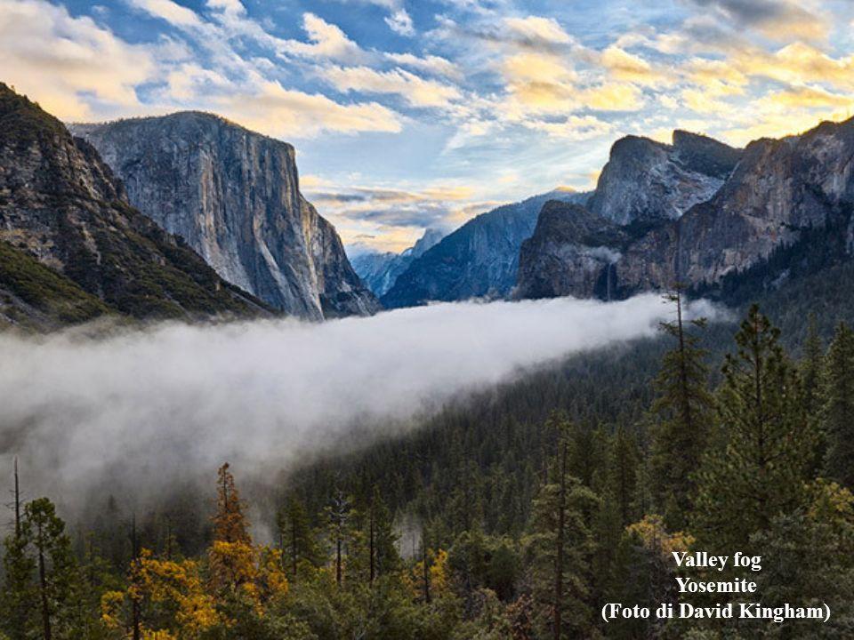 Valley fog Yosemite (Foto di David Kingham)