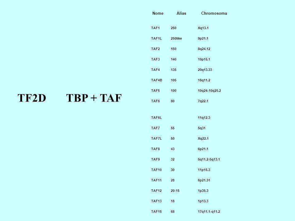 NomeAliasChromosoma TAF1250Xq13.1 TAF1L250like9p21.1 TAF21508q24.12 TAF314010p15.1 TAF413520q13.33 TAF4B10518q11.2 TAF510010q24-10q25.2 TAF6807q22.1 TAF6L11q12.3 TAF7555q31 TAF7L50Xq22.1 TAF8436p21.1 TAF9325q11.2-5q13.1 TAF103011p15.3 TAF11286p21.31 TAF1220-151p35.3 TAF13181p13.3 TAF156817q11.1-q11.2 TF2D TBP + TAF