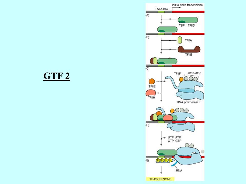 GTF 2