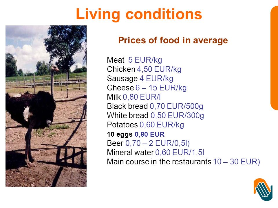 Prices of food in average Meat 5 EUR/kg Chicken 4,50 EUR/kg Sausage 4 EUR/kg Cheese 6 – 15 EUR/kg Milk 0,80 EUR/l Black bread 0,70 EUR/500g White bread 0,50 EUR/300g Potatoes 0,60 EUR/kg 10 eggs 0,80 EUR Beer 0,70 – 2 EUR/0,5l) Mineral water 0,60 EUR/1,5l Main course in the restaurants 10 – 30 EUR) Living conditions