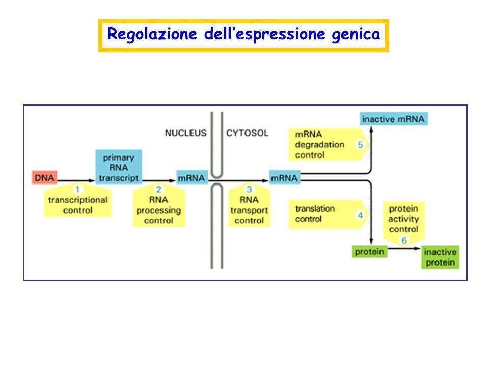 Regolazione dellespressione genica