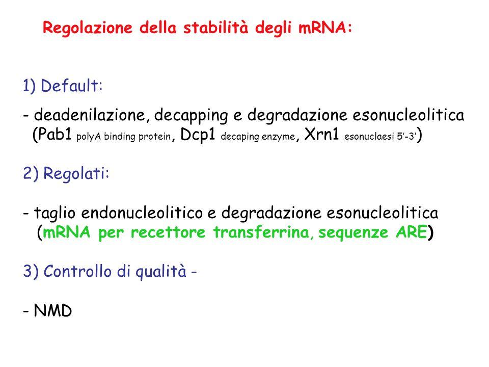 1) Default: - deadenilazione, decapping e degradazione esonucleolitica (Pab1 polyA binding protein, Dcp1 decaping enzyme, Xrn1 esonuclaesi 5-3 ) 2) Re