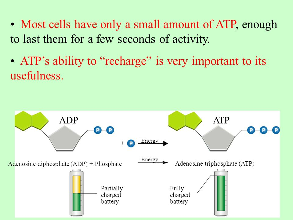 Cellular Respiration. Energy and Life 8-1 Page ppt download