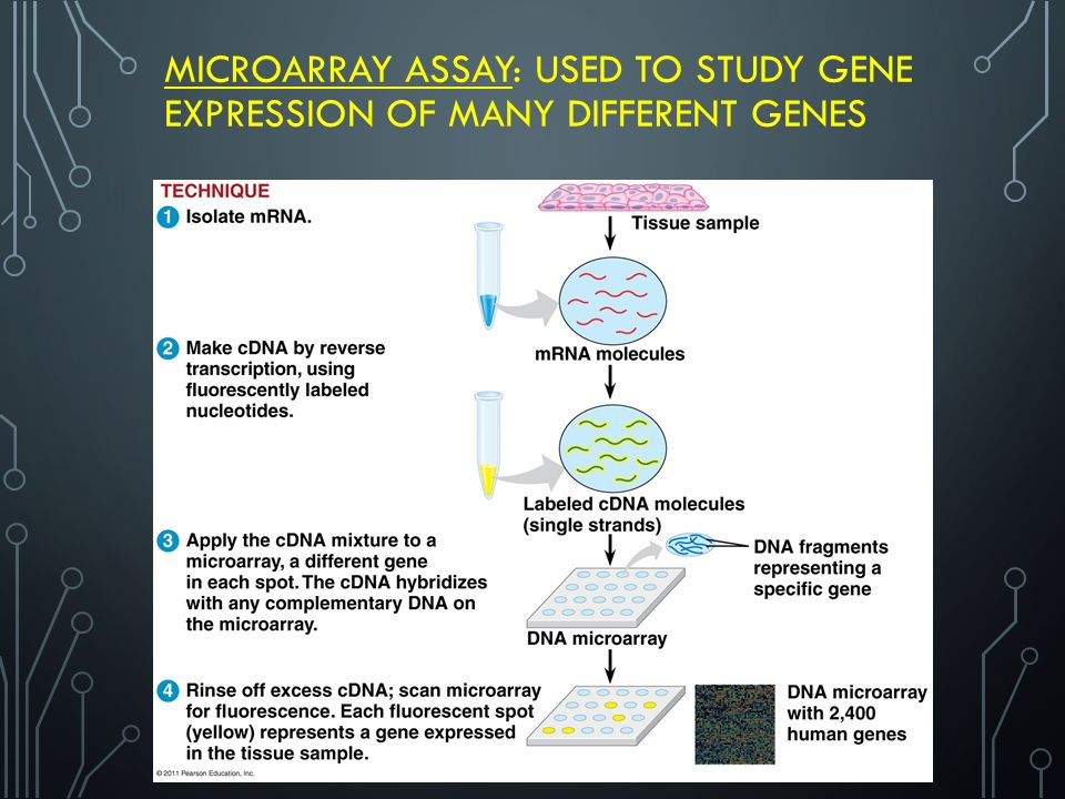 MICROARRAY ASSAY: USED TO STUDY GENE EXPRESSION OF MANY DIFFERENT GENES