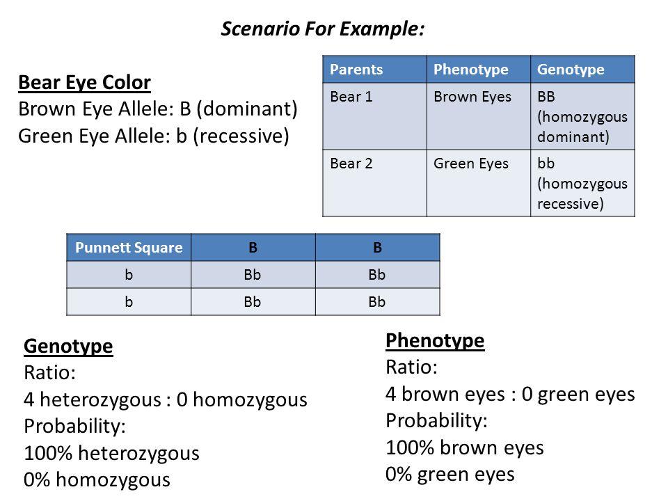 13 Scenario For Example: Bear Eye Color Brown ...