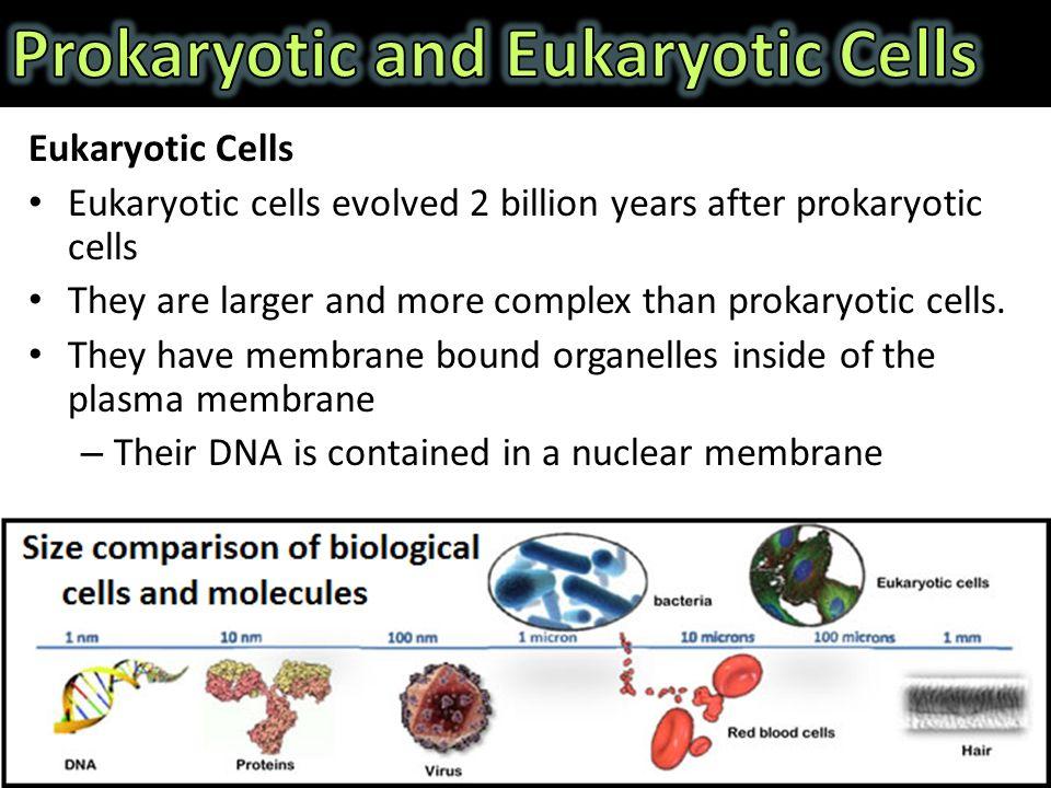 prokaryotes eukaryotes and viruses How do prokaryotes and eukaryotes differ in why might it be simpler for these viruses to attack prokaryotic cells than prokaryotic vs eukaryotic 4.