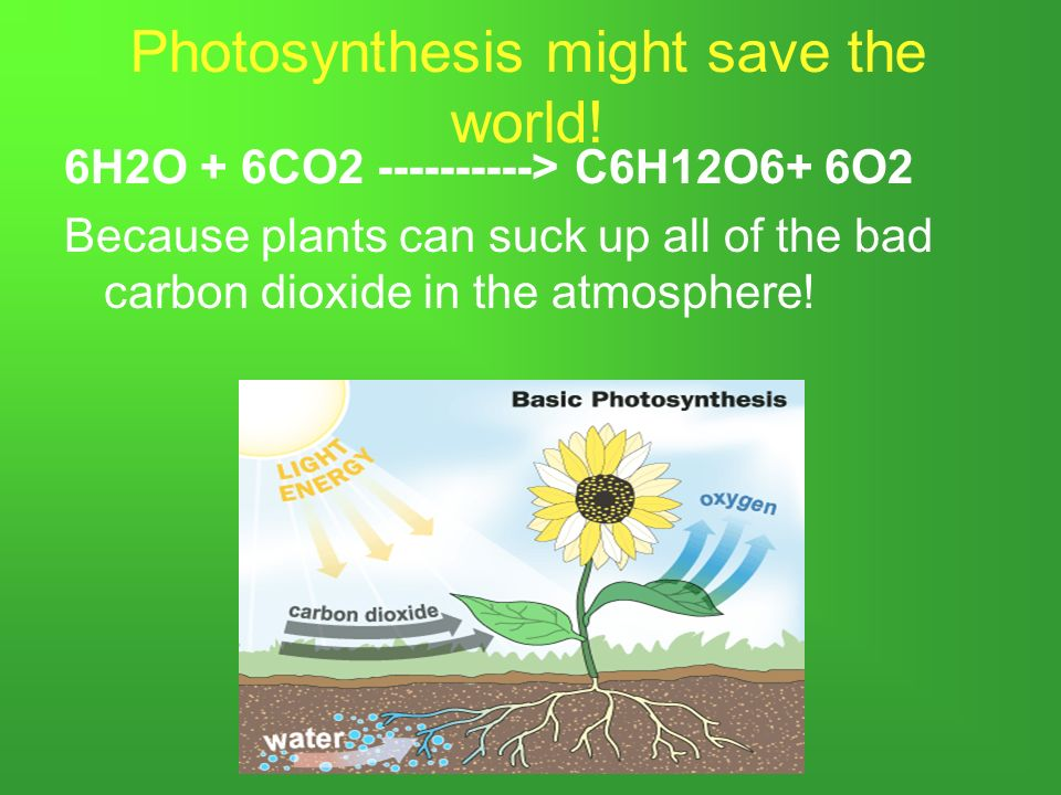 Photosynthesis. What is Photosynthesis? Photosynthesis uses the ...