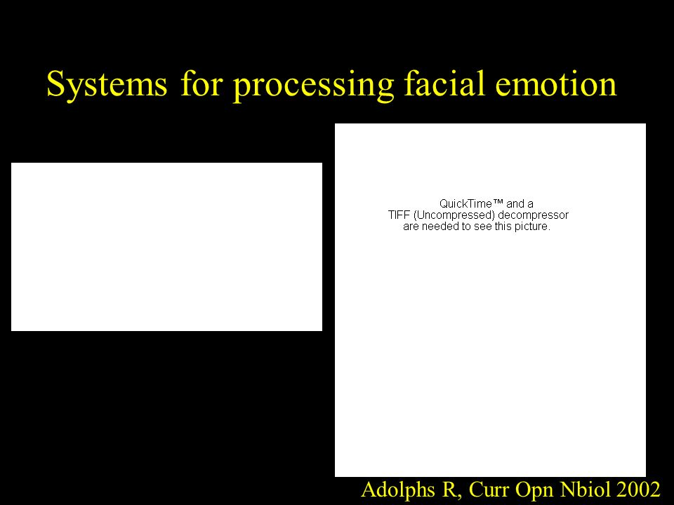 Systems for processing facial emotion Adolphs R, Curr Opn Nbiol 2002