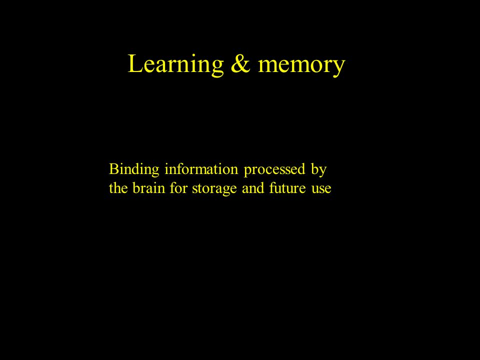 Learning & memory Binding information processed by the brain for storage and future use