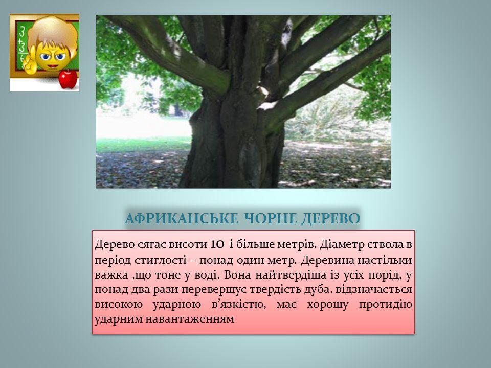 АФРИКАНСЬКЕ ЧОРНЕ ДЕРЕВО Дерево сягає висоти 10 і більше метрів.