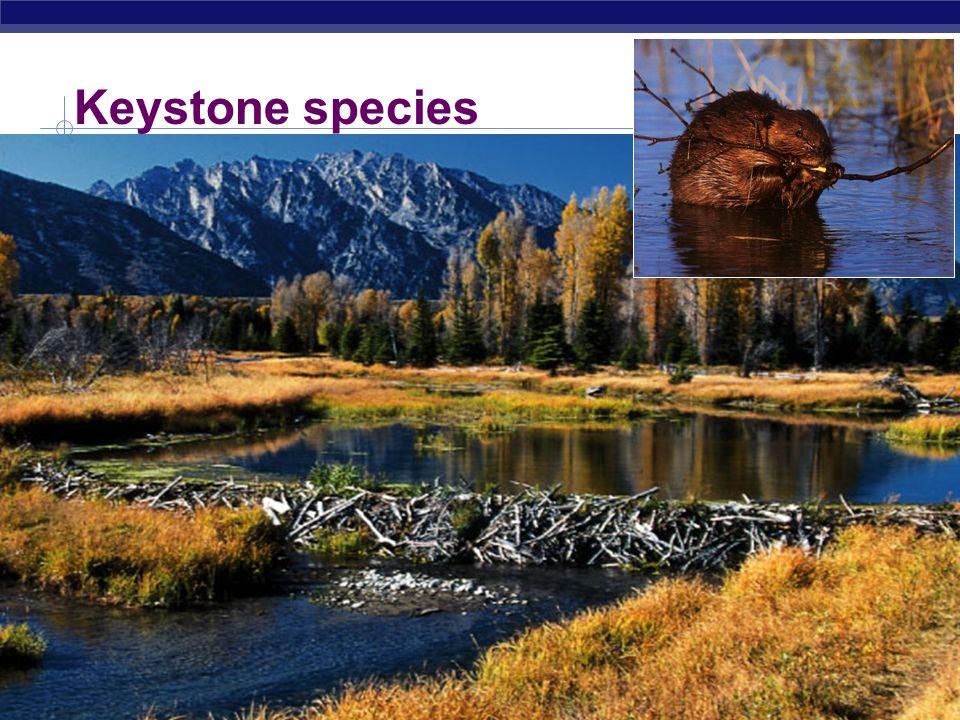 what is a keystone species Global species programe: how wwf classifies global species programe: how wwf classifies species a keystone species is a species that plays an essential.