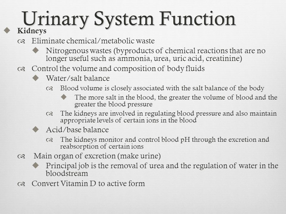 Awesome Anatomy And Physiology Of Renal System Ppt Pattern - Anatomy ...