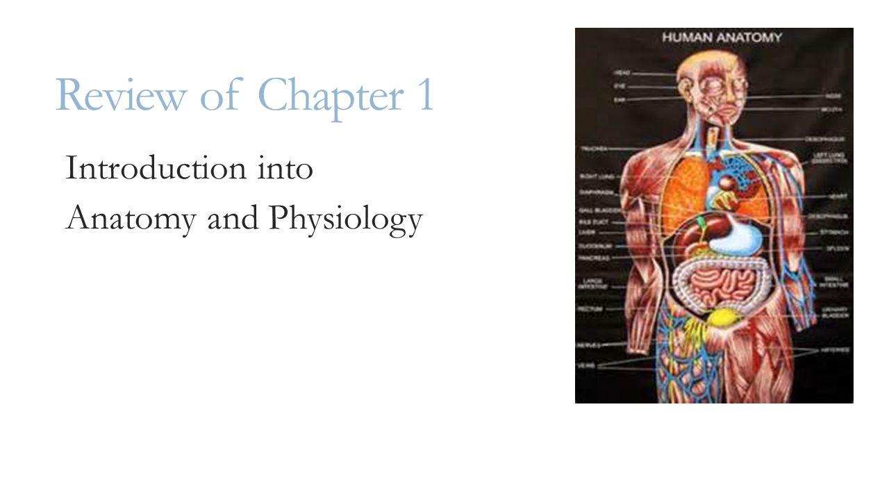 Atractivo Anatomy And Physiology Midterm Exam Modelo - Imágenes de ...