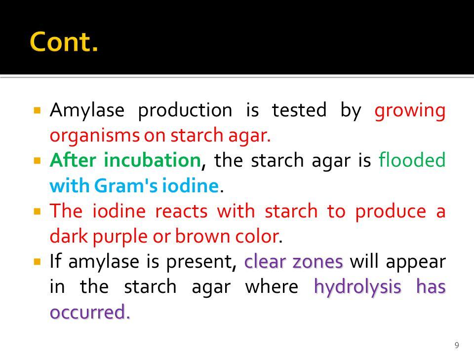 organisns used in amylase