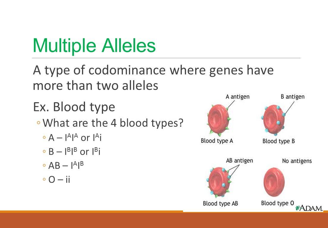 Multiple alleles definition