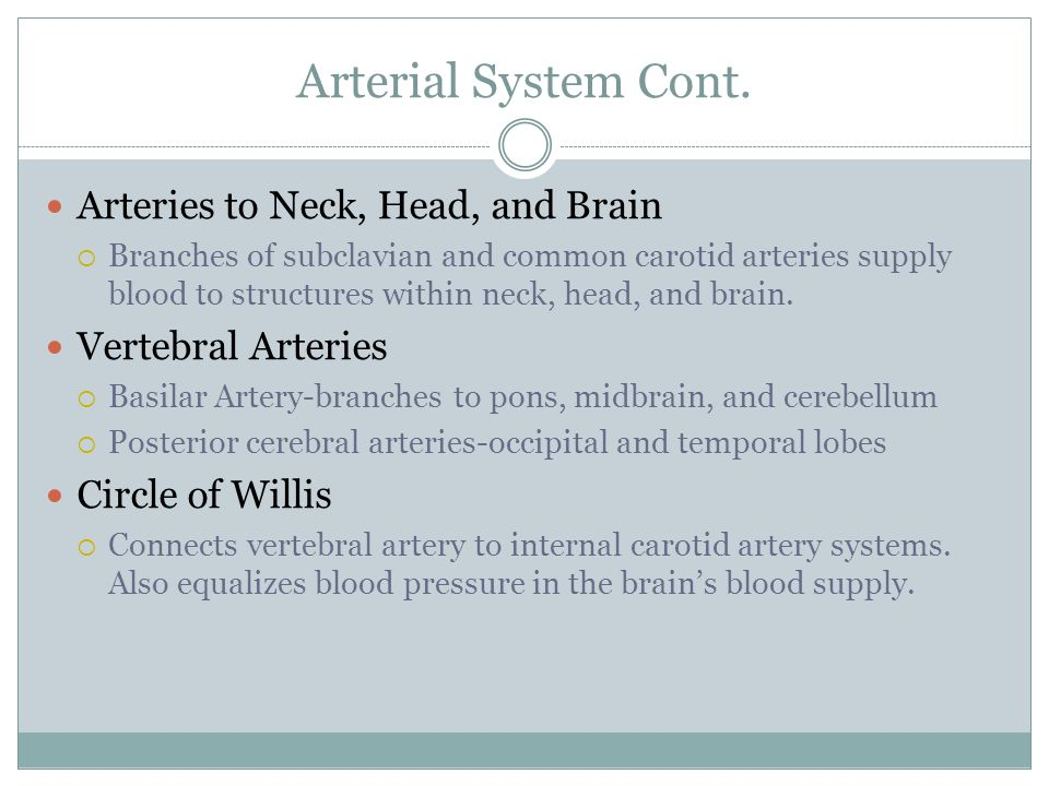 Arterial System Cont. Arteries to Neck, Head, and Brain  Branches of subclavian and common carotid arteries supply blood to structures within neck, h