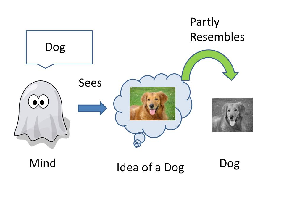 Mind Idea of a Dog Dog Partly Resembles Sees Dog