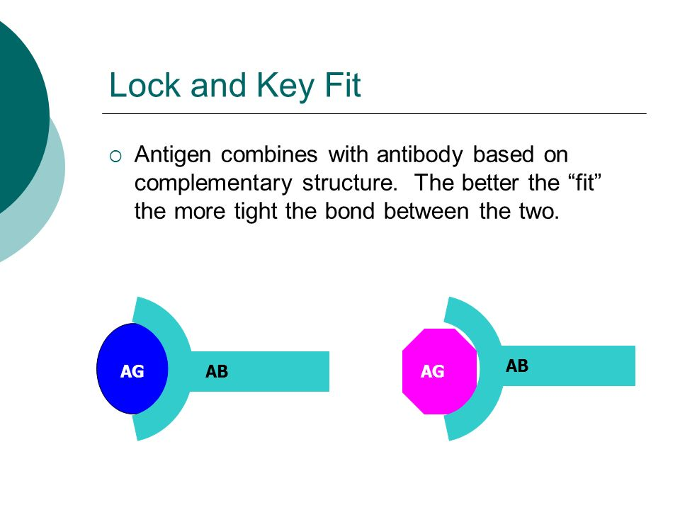 Lock and Key Fit  Antigen combines with antibody based on complementary structure.