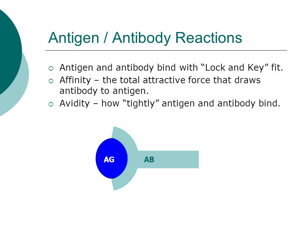 Antigen / Antibody Reactions  Antigen and antibody bind with Lock and Key fit.