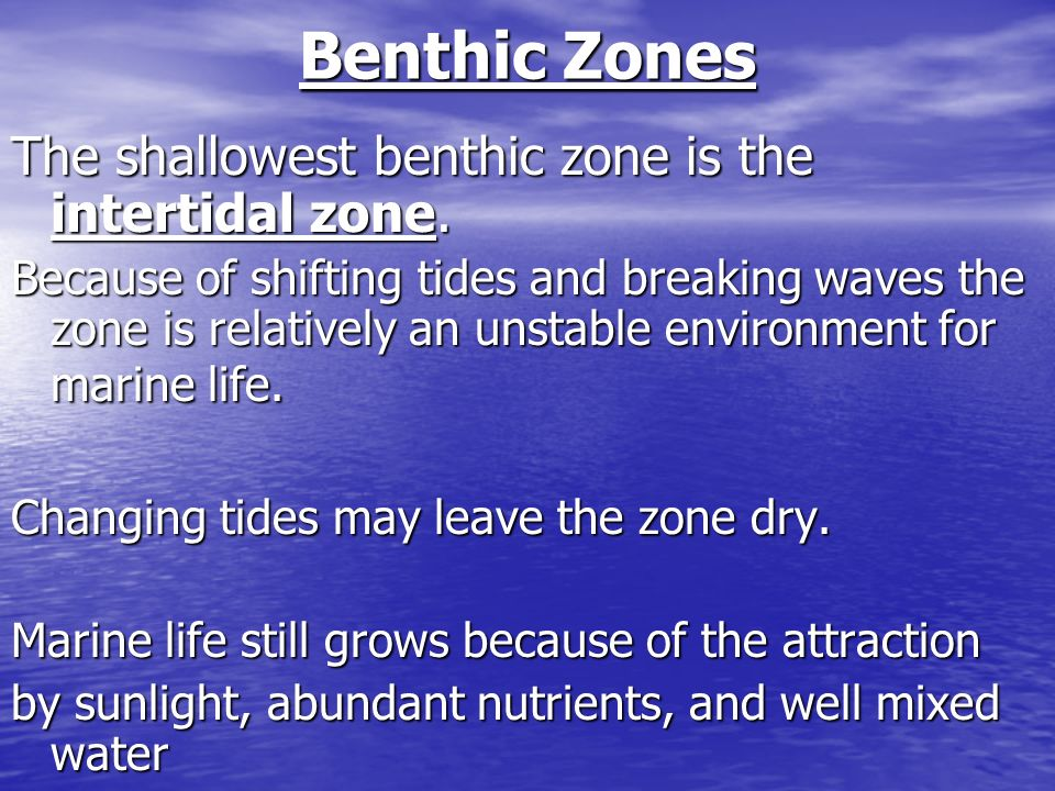 Benthic Zones The shallowest benthic zone is the intertidal zone.