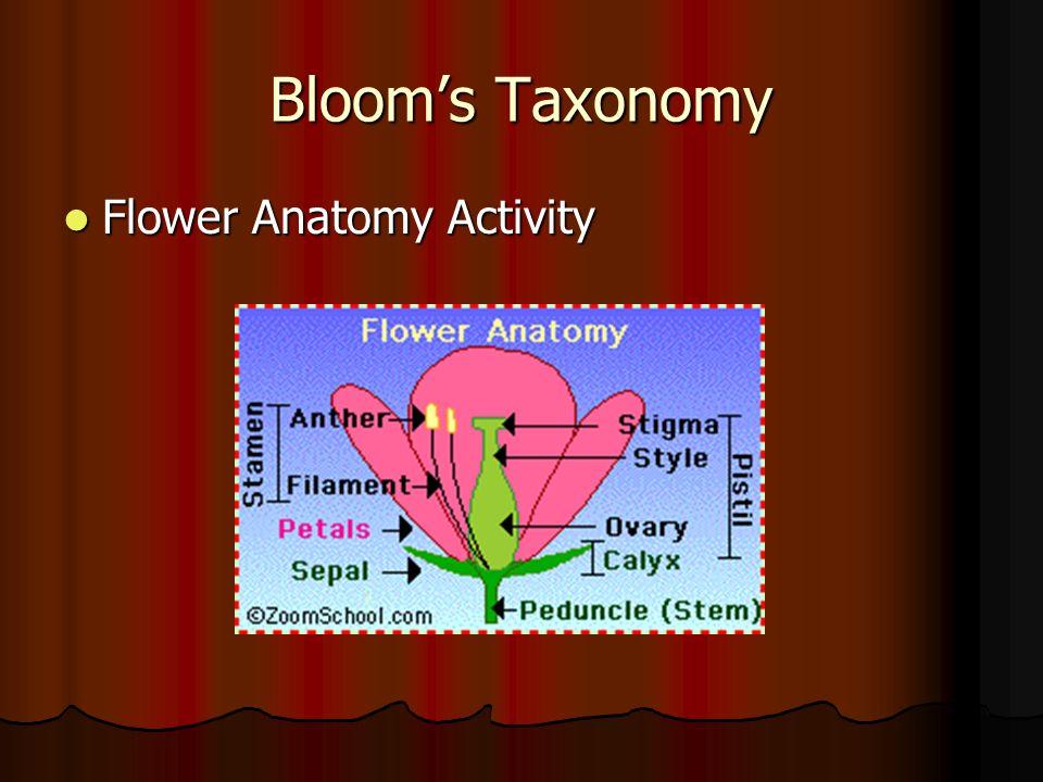 Bloom's Taxonomy Flower Anatomy Activity Flower Anatomy Activity