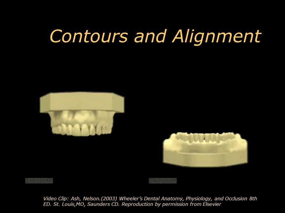 Modern Wheelers Dental Anatomy Physiology And Occlusion Festooning ...