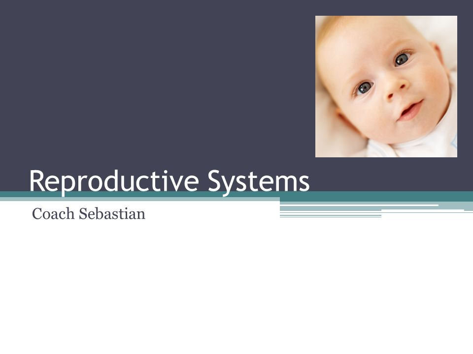 Reproductive Systems Coach Sebastian