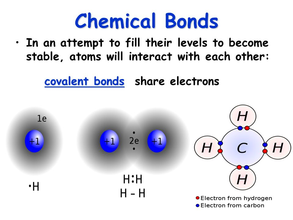 "Why study Chemistry in Anatomy? ""Chemical reactions underlie all ..."